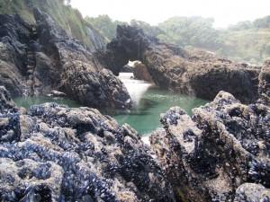 Vida marina en las rocas